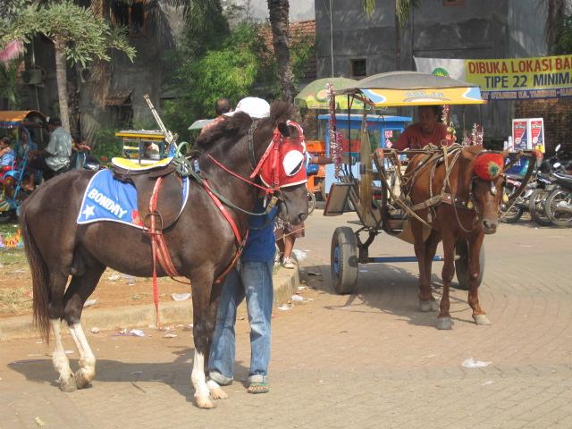 Hewan-Hewan yang Sering Digunakan sebagai Kendaraan